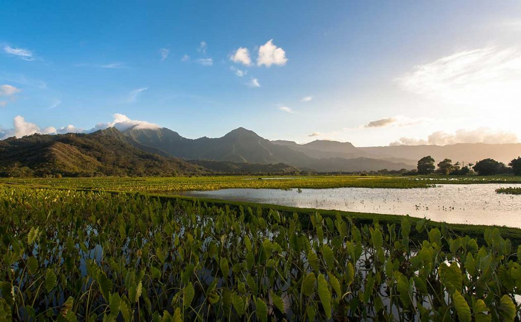 a scenic shot of the Hanalei valley on the island of kauai. The sun is setting and illuminating the taro fields.